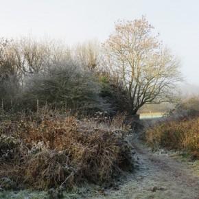 frost nella campagna