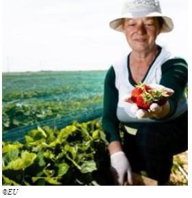 Nuovi prestiti per mobilitare un miliardo di euro per il settore agricolo e della bioeconomia